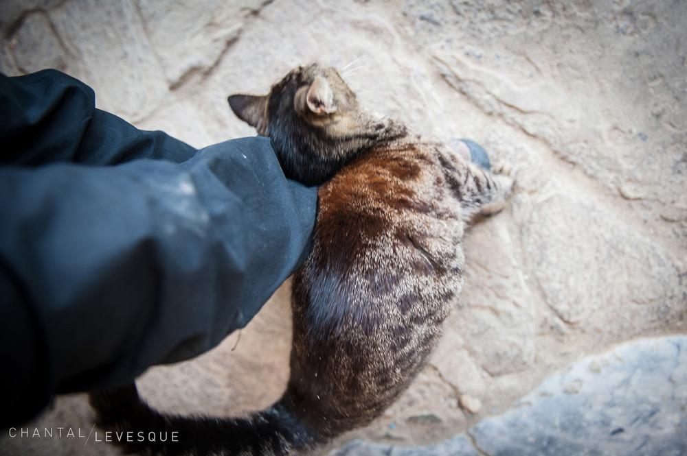 cats-0195.jpg