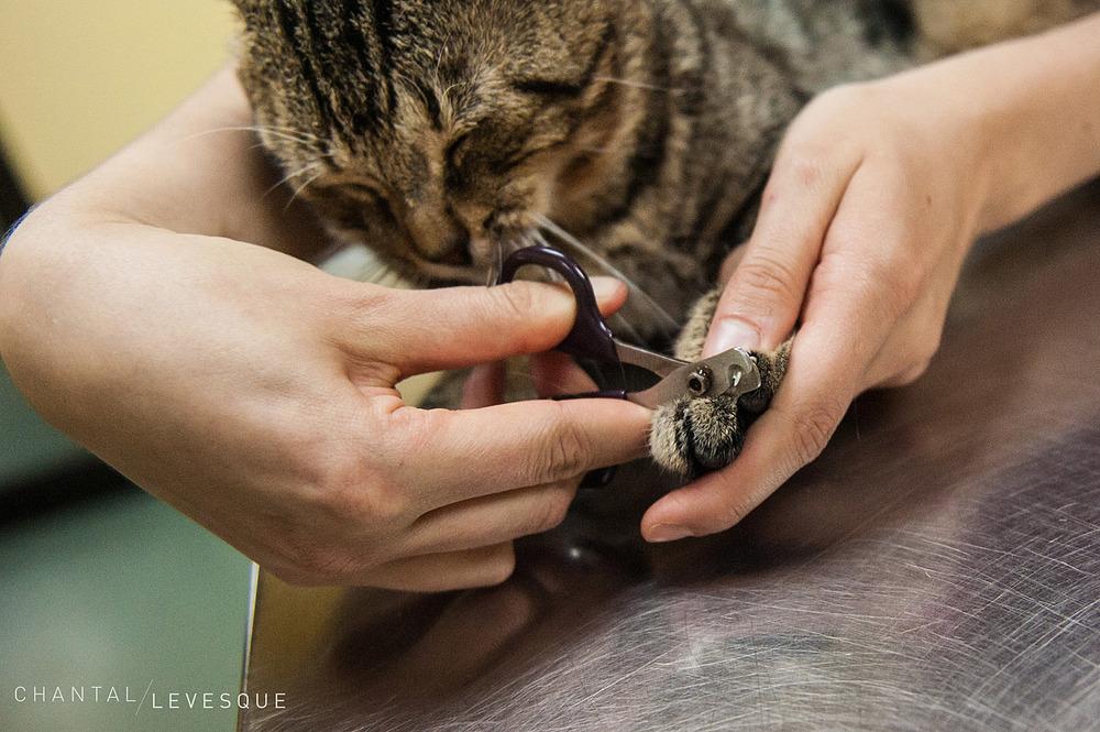SPCA-griffes-6405.jpg