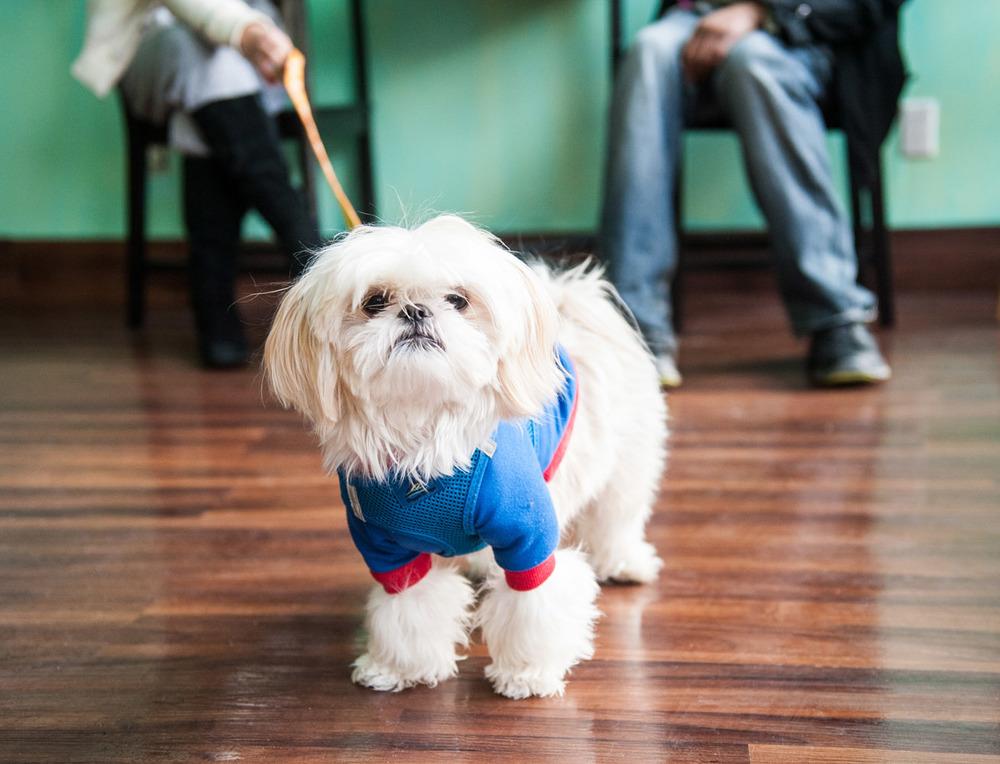 DoggyCafe-4920.jpg