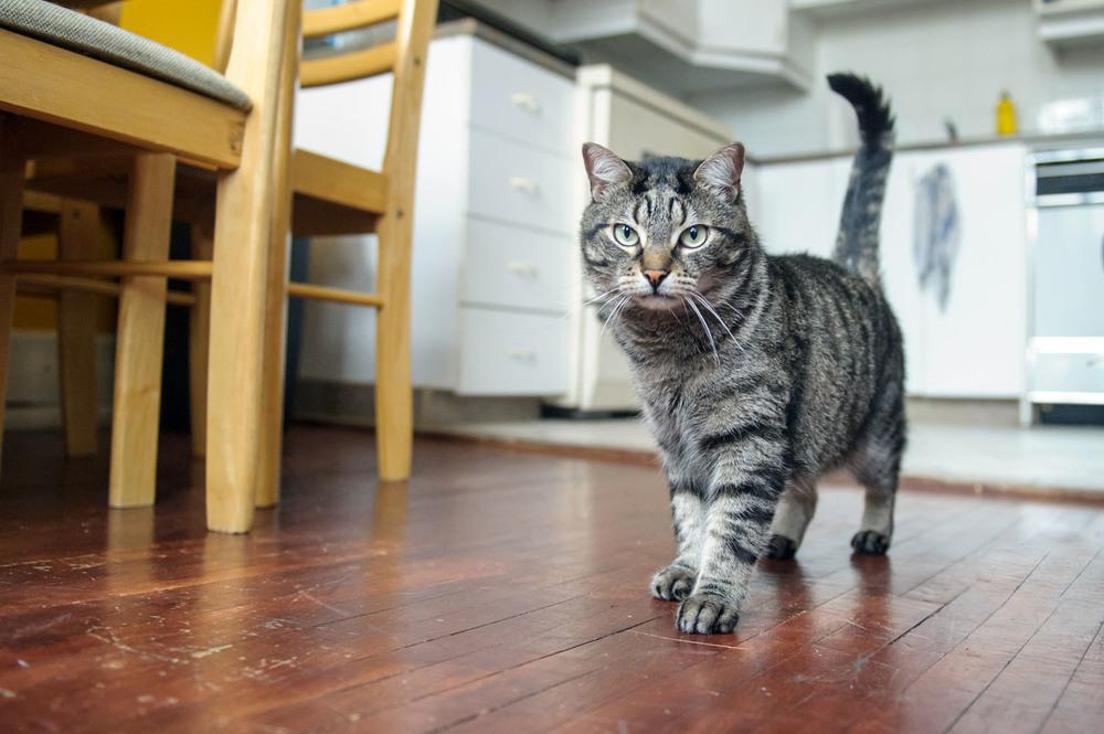 tabby-cat-6673.jpg