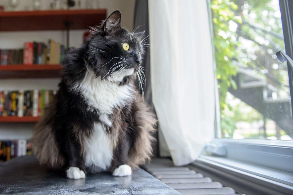 tuxedo-cat-portrait-3844.jpg