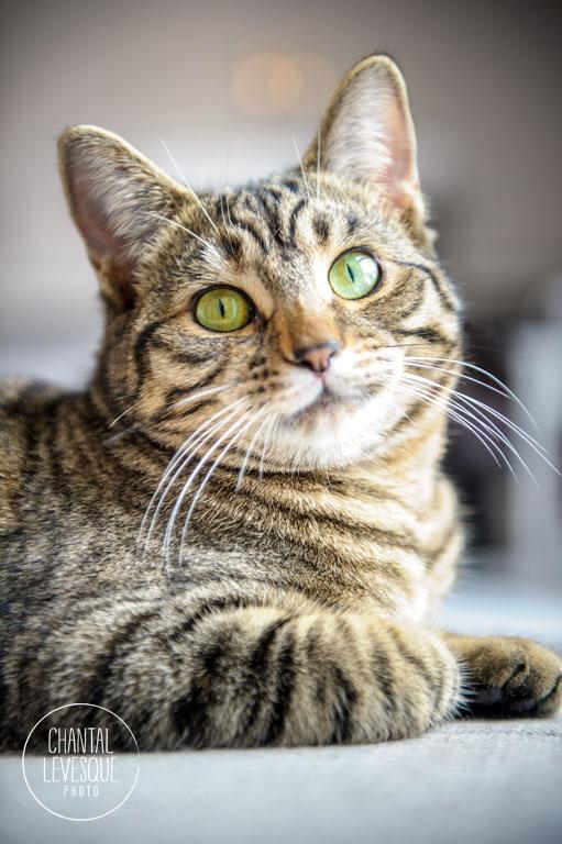 site chat adoption notre dame des prairies