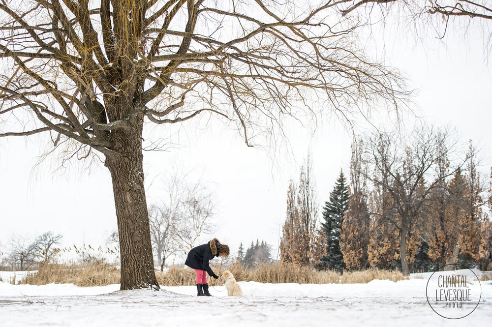 Montreal-Goldendoodle-hiver