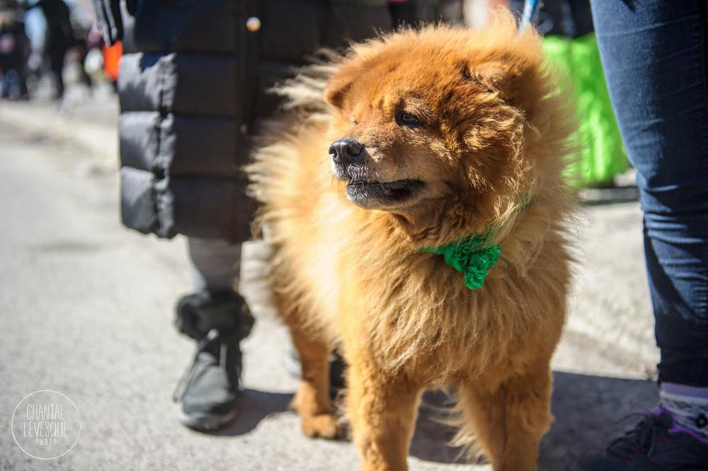 SPCA-St-Patrick-0414.jpg