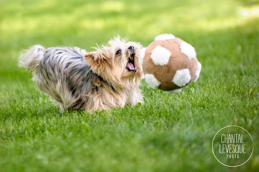 Becky qui capote sur son ballon de soccer