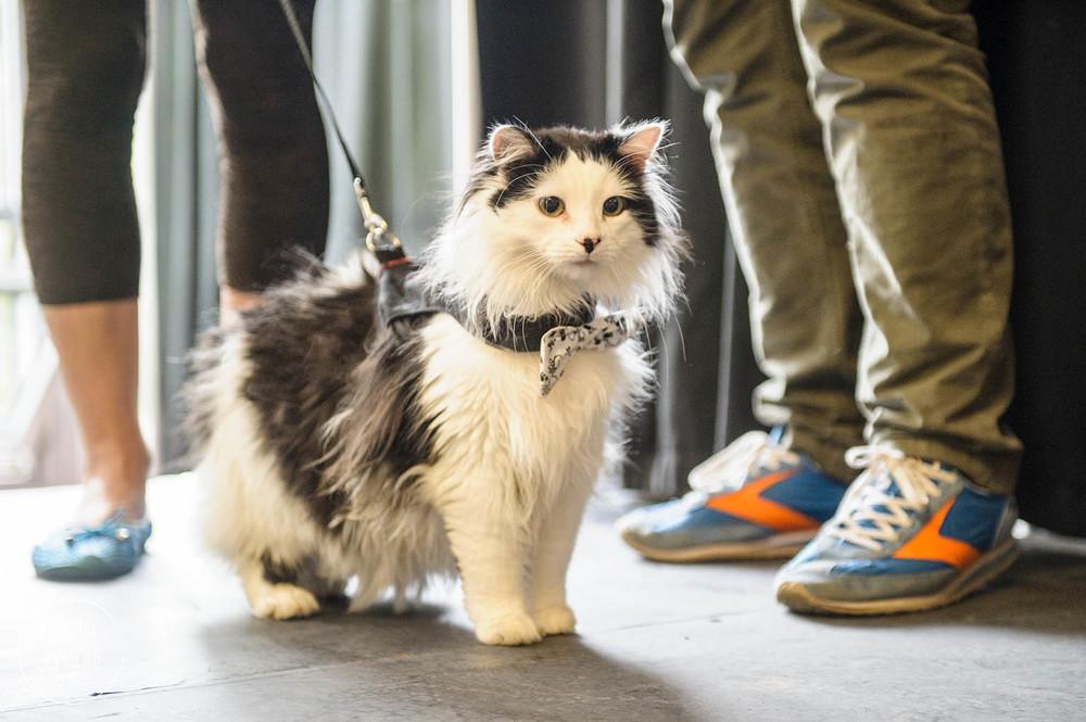 The Oreo Cat