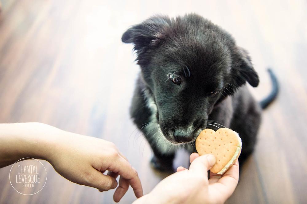 dog-ice-cream