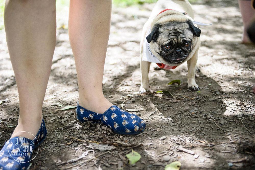 pug-shoes