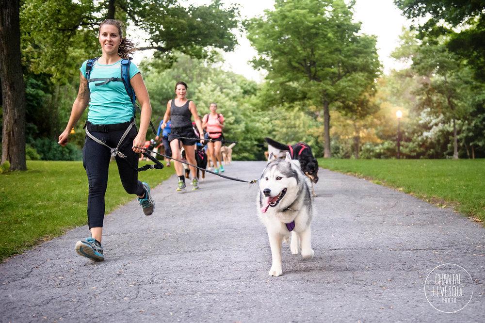 running-husky