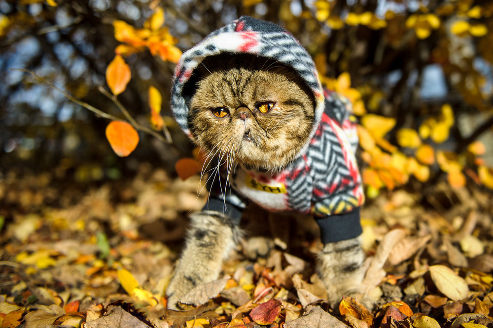cat-fall-leaves-1594.jpg