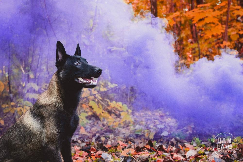 dog-portrait-smoke-bomb