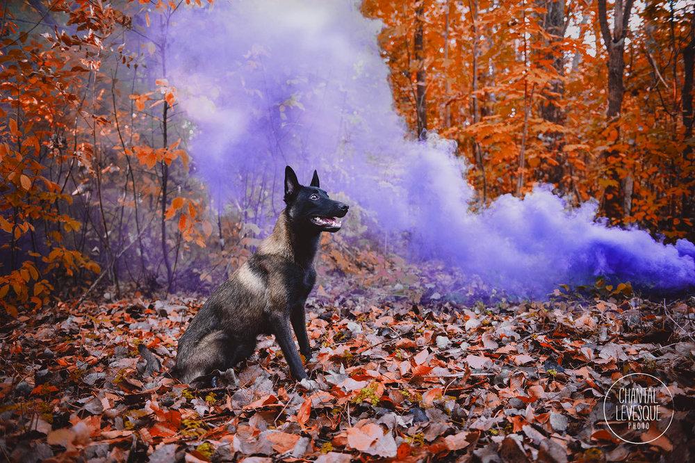 smoke-bomb-photography