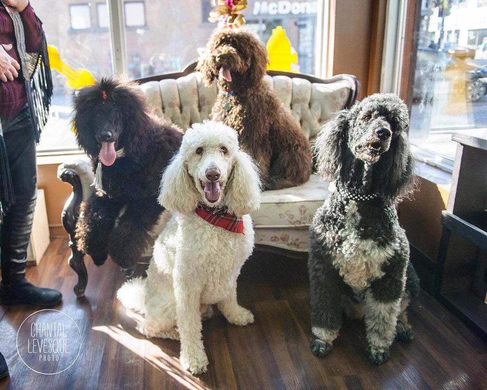 Doggy-cafe-frises-2323.jpg