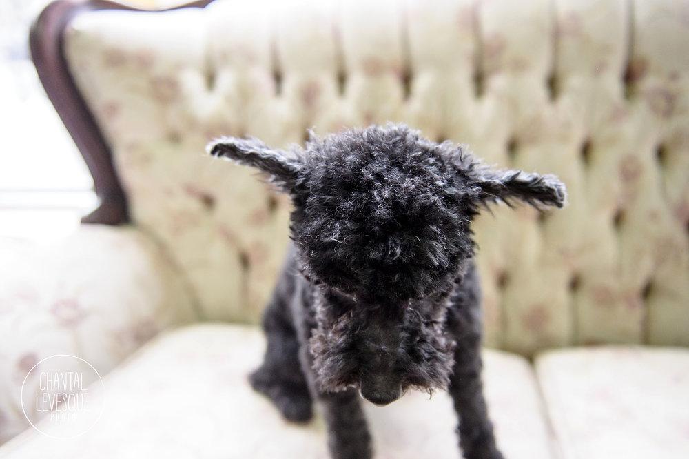 Doggy-cafe-frises-2498.jpg