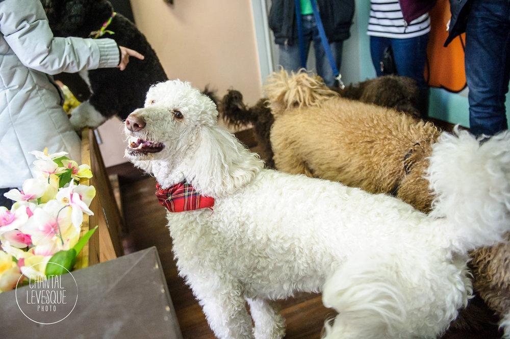 Doggy-cafe-frises-2636.jpg
