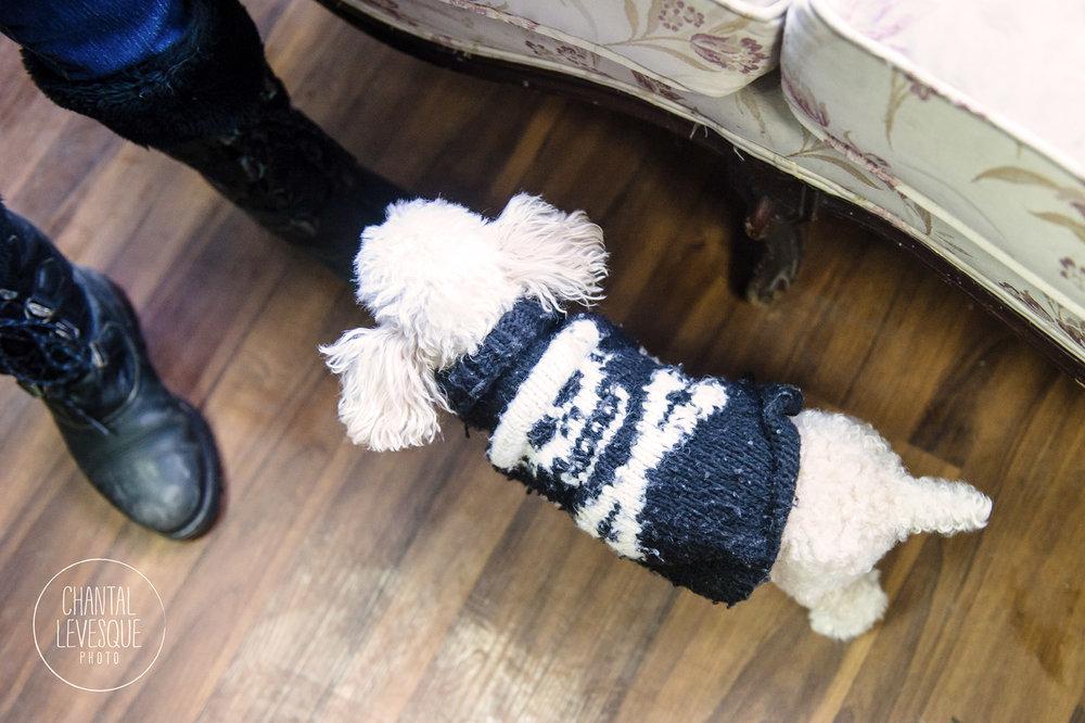 Doggy-cafe-frises-3247.jpg