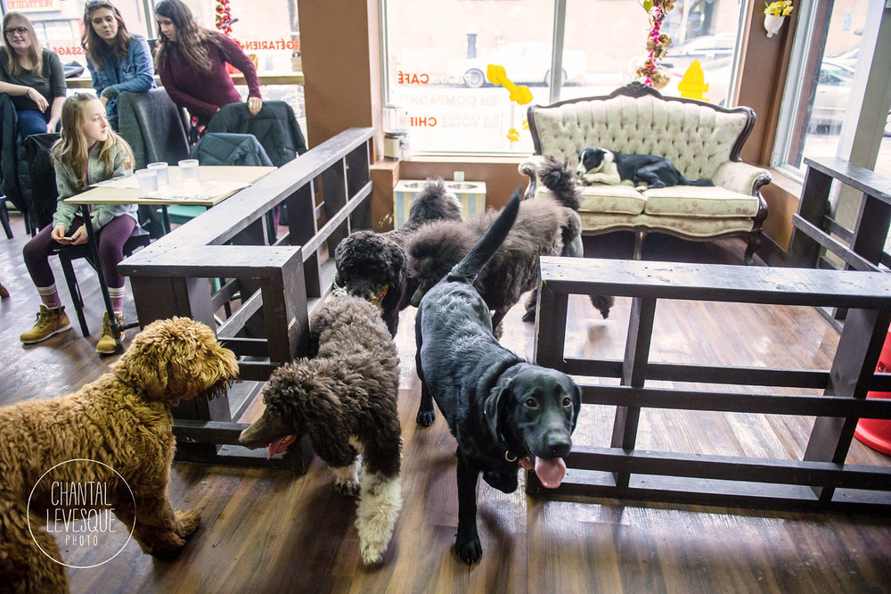 Doggy-cafe-frises-3478.jpg