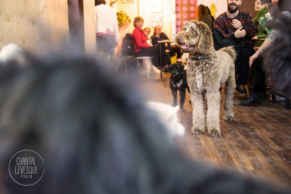 Doggy-cafe-frises-3523.jpg