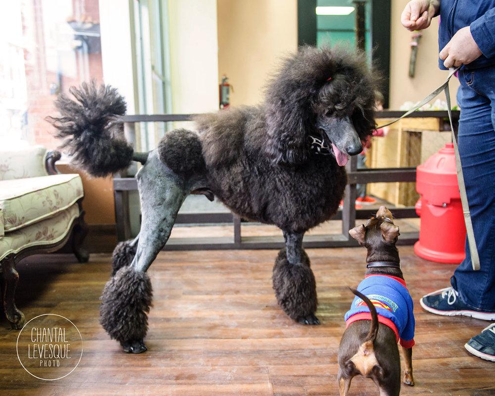 Doggy-cafe-frises-3324.jpg
