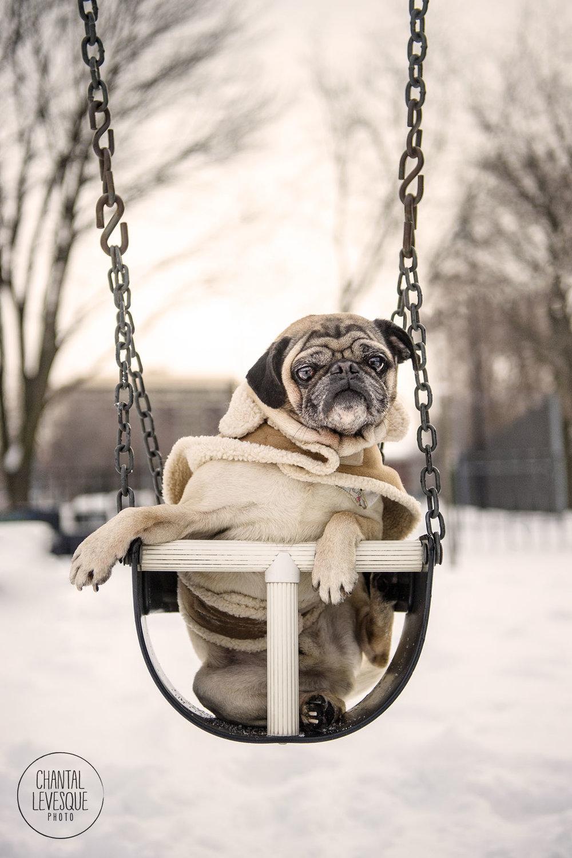 pug-fun