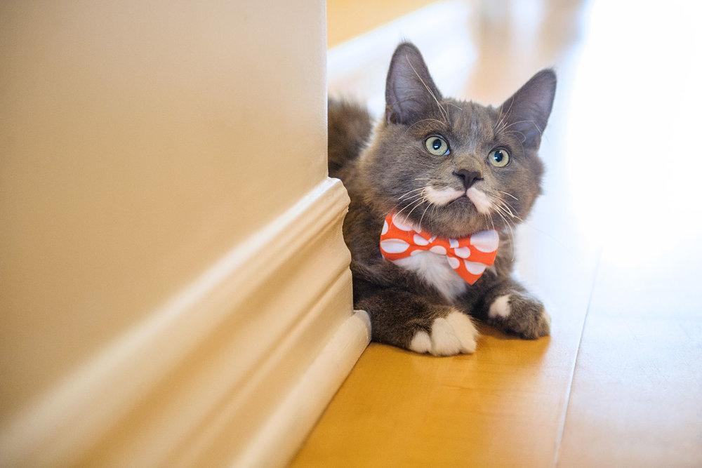 montreal-cat-photographer-5174.jpg