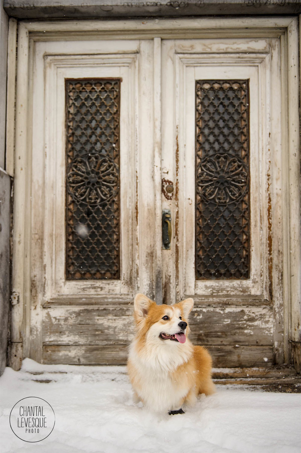 dog-photographer-doorway-montreal