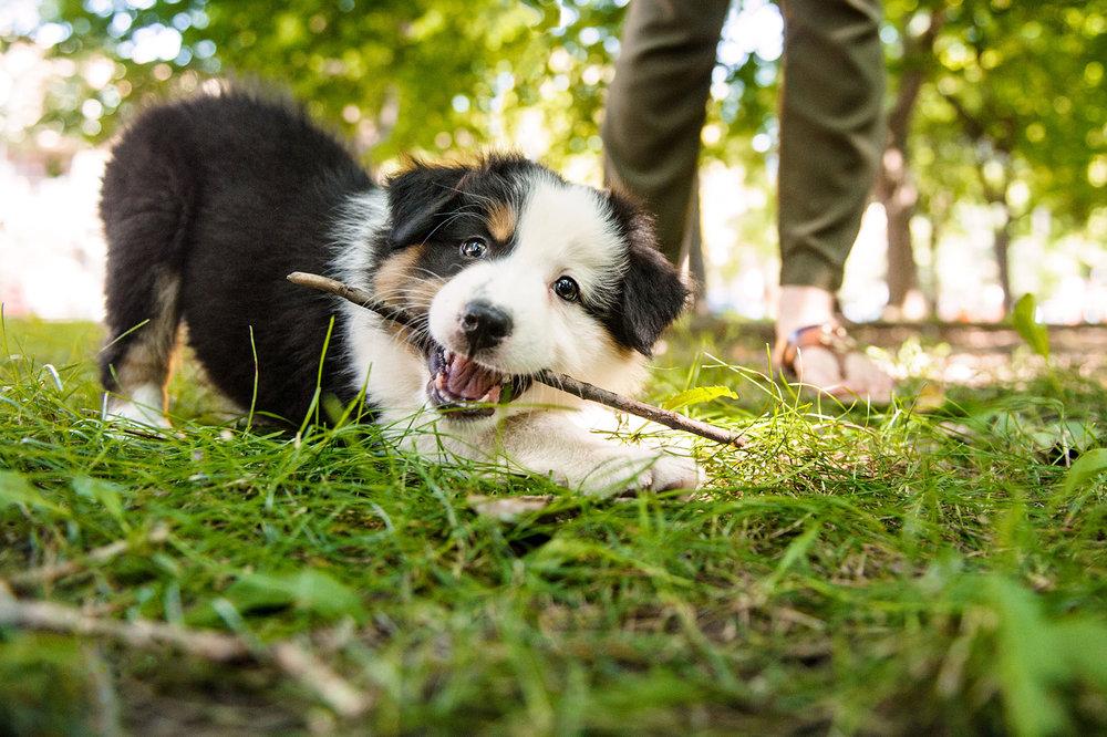 puppy-8348.jpg