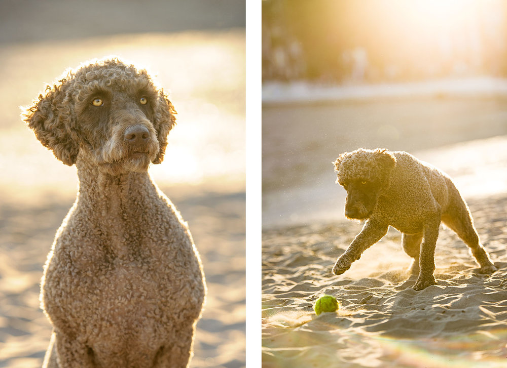 dog-photography-beach-sunset-0286.jpg