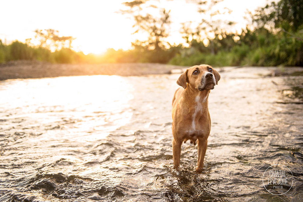 dog-photography-river
