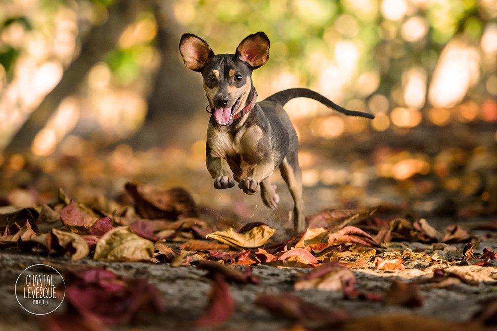 dog-running-beach