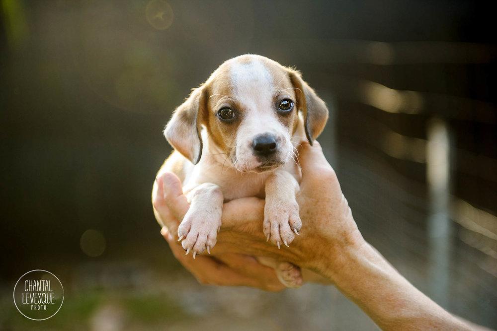 barkarica-puppy-5178.jpg