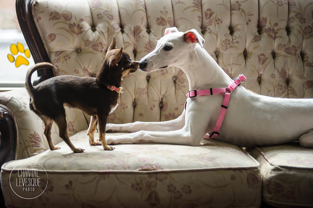puppy-playtime
