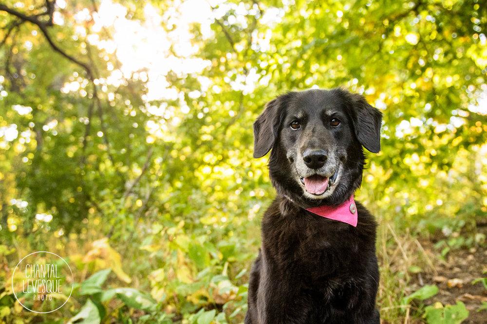 dog-photography-mount-royal