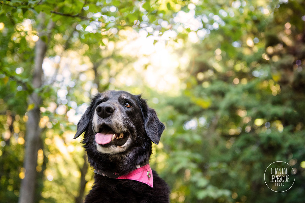 black-dog-smile