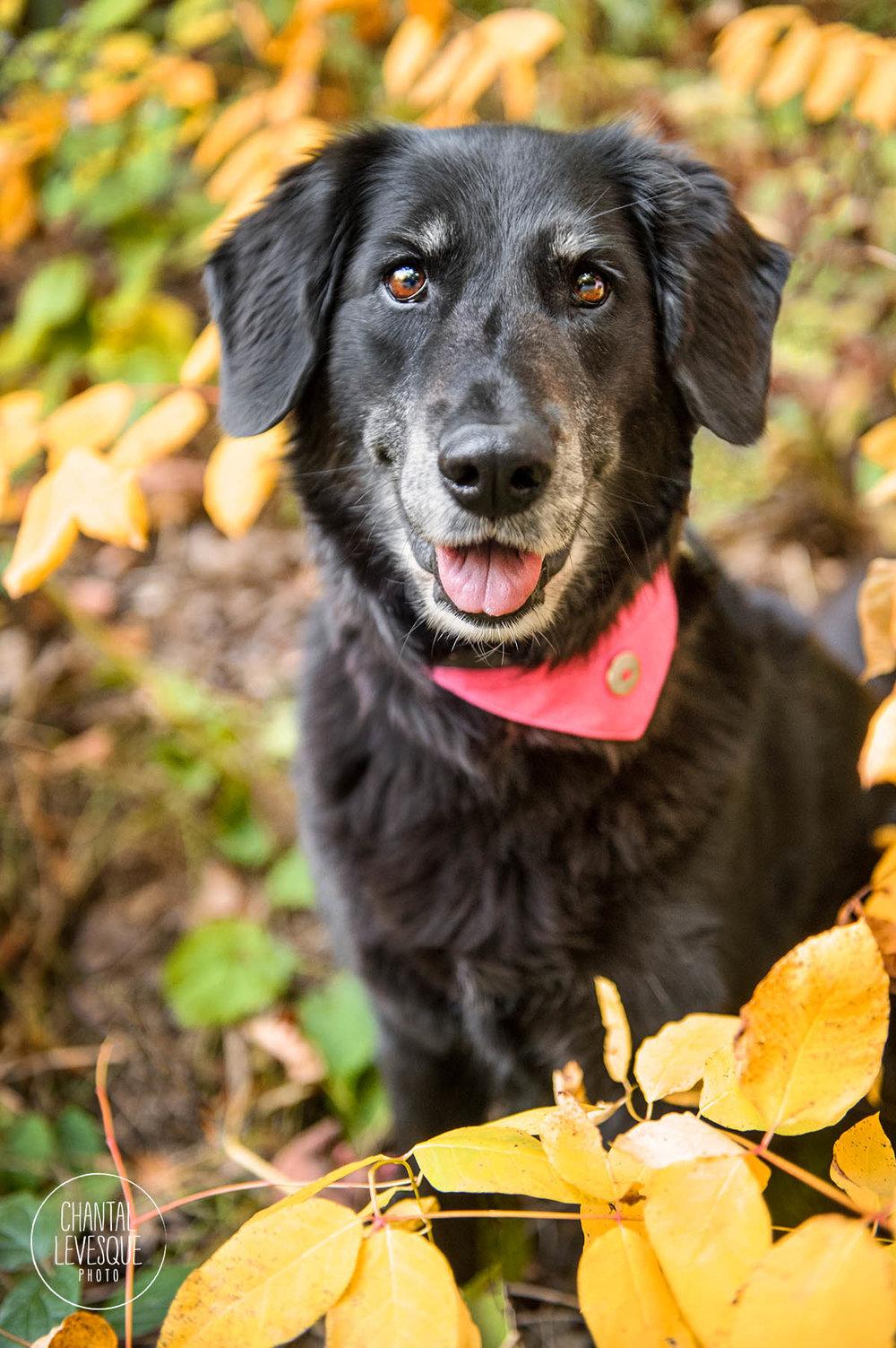 fall-photography-dog-montreal