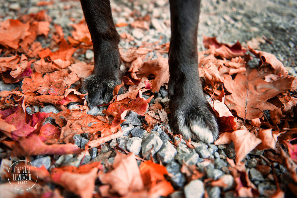 dog-paws-fall-leaves