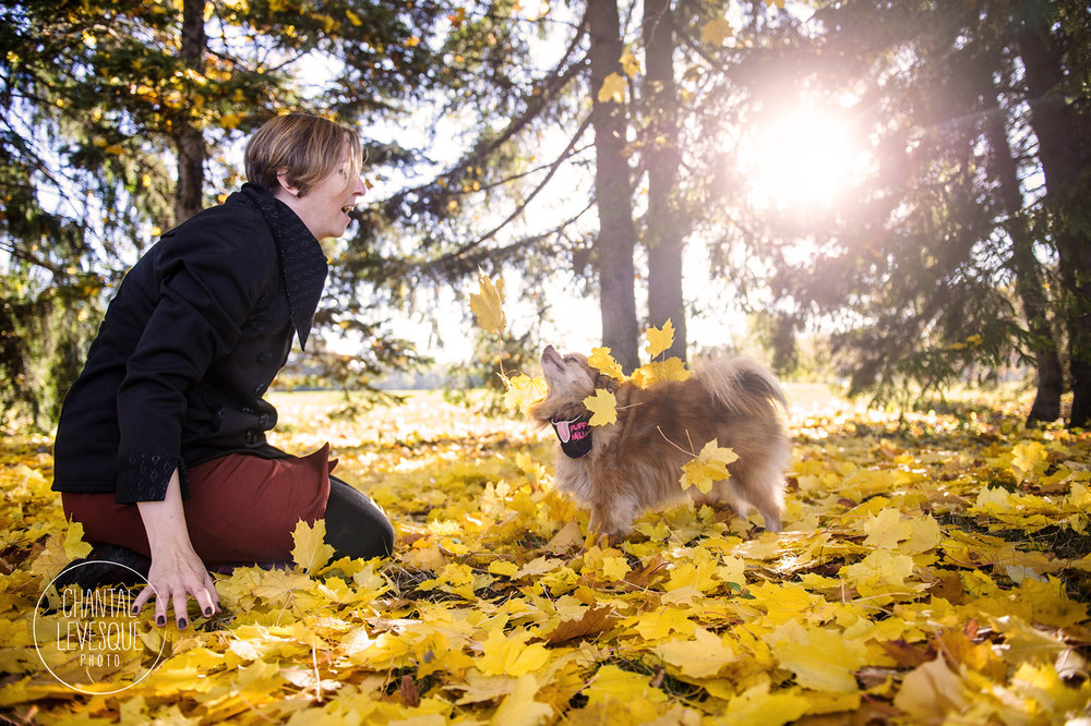 pomeranian-play-leaves-montreal-park