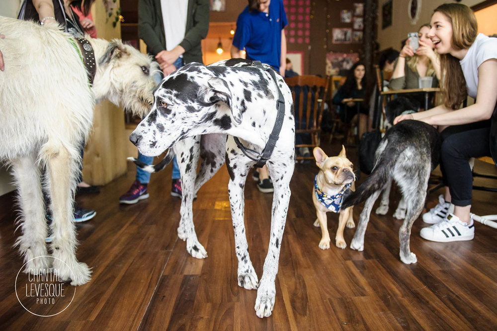 dog-party-doggy-cafe