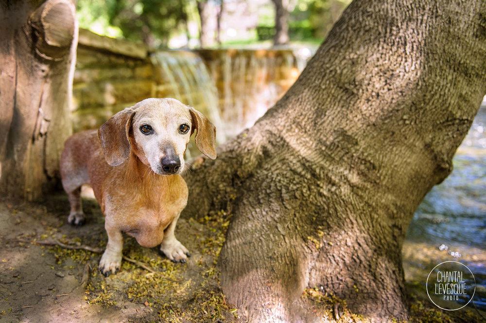 dog-photography-montreal