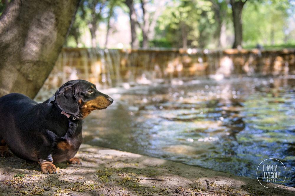 dog-photo-waterfall-westmount
