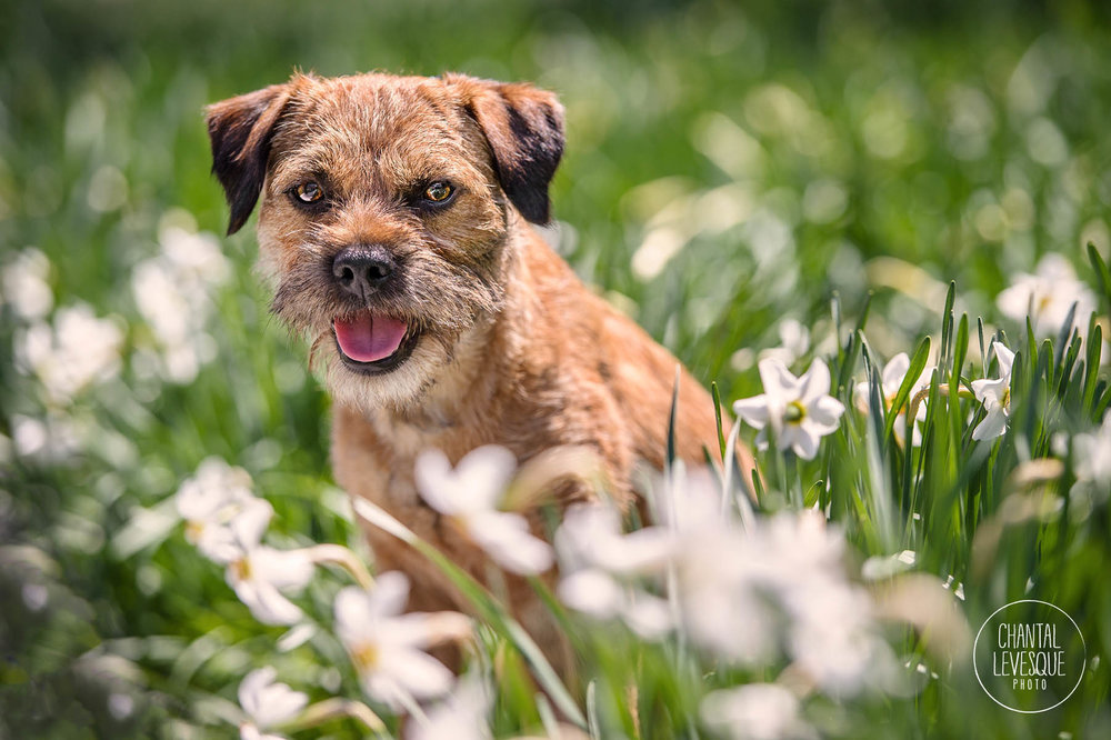 Terrier-flowers-photography.jpg