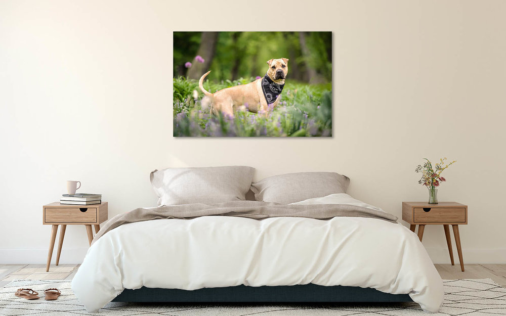 dog-portrait-wall-art