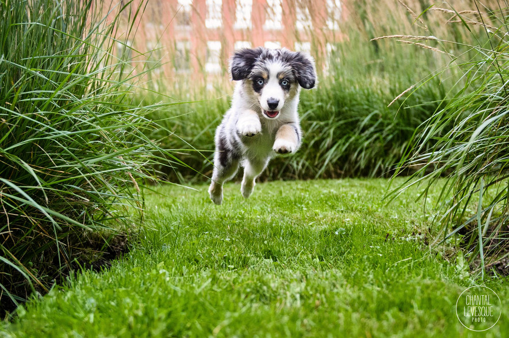 puppy-jump-photography