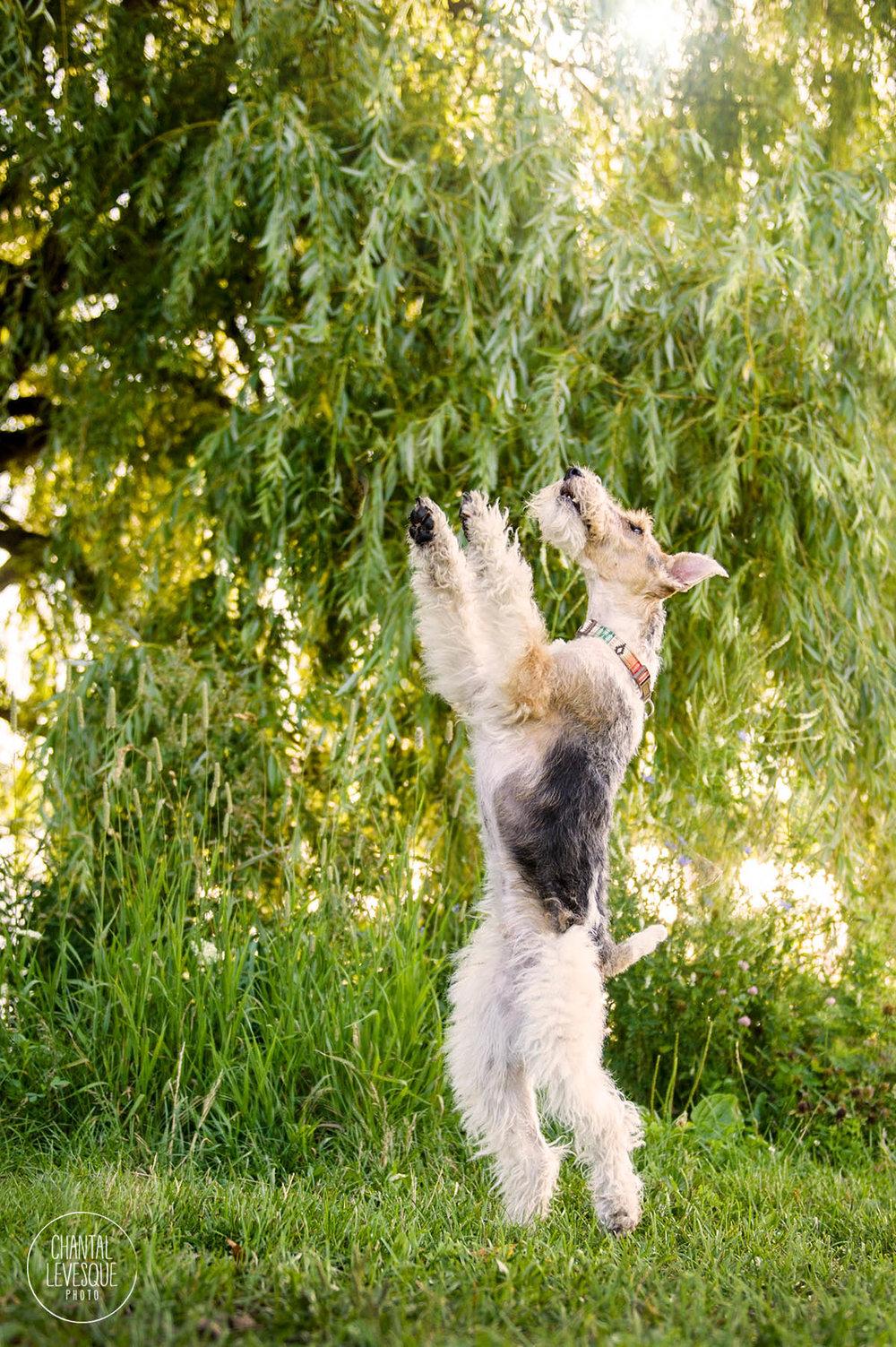 dog-photographer-montreal.jpg
