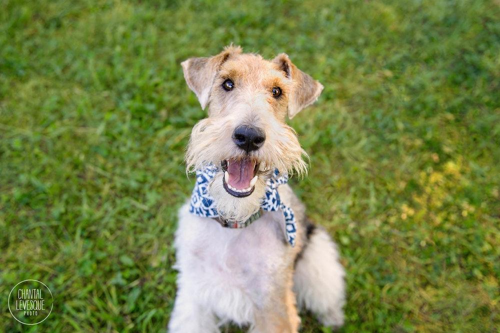 dog-smile-photography-montreal