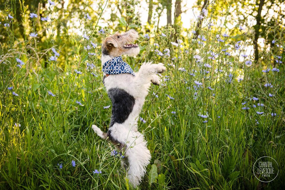 chien-marche-photo-verdun