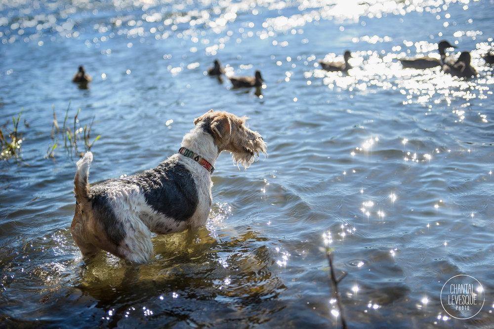 dog-photographer-water-verdun