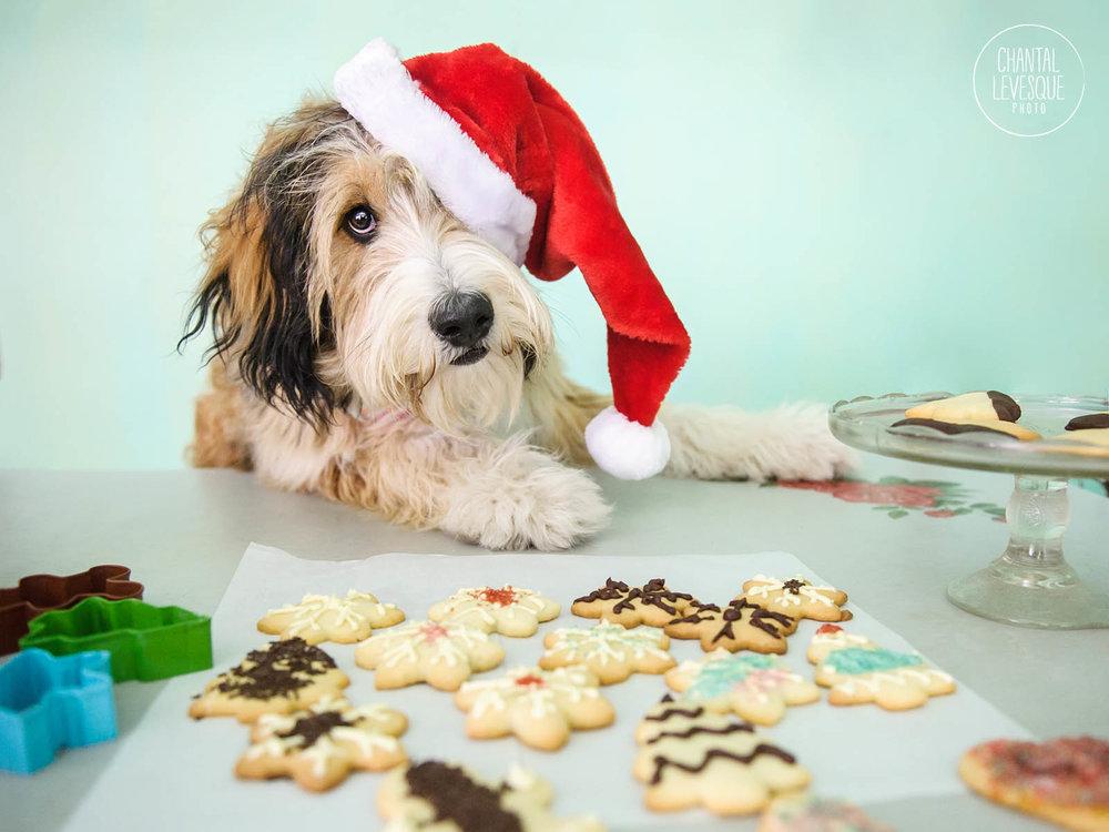 Doggy-Calendrier-Aloha-6043-web.jpg