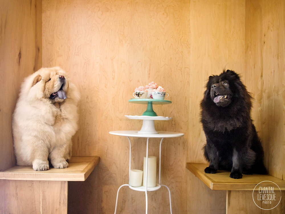 Doggy-calendrier-Chowchows-7349-web.jpg