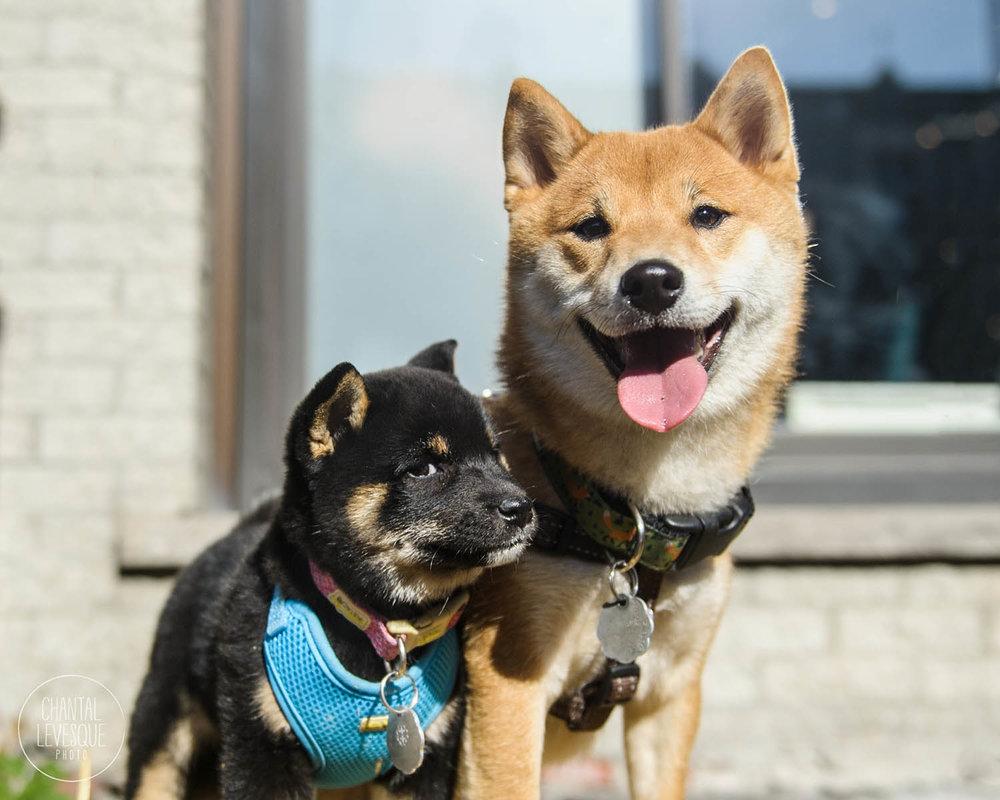 Doggy-casting-basenji-9629.jpg